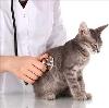 Ветеринарные клиники в Захарово